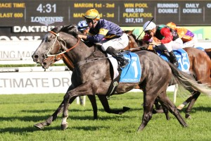 Chautauqua has been included in 2017 Canterbury Stakes nominations. Photo: Ultimate Racing Photos