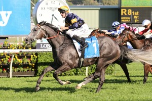 Chautauqua currently leads 2017 TJ Smith Stakes betting markets. Photo: Ultimate Racing Photos