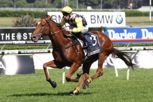 Clearly Innocent could target a race like the Group 2 Theo Marks Stakes through the forthcoming Spring Carnival. Photo: Steve Hart