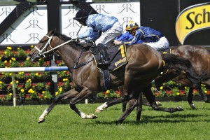 Libran will now head to the Sydney Cup after winning the Chairman's Handicap at Randwick. Photo Steve Hart.