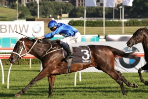 Winx remains favourite to win the Group 1 George Main Stakes at Randwick this afternoon. Photo: Ultimate Racing Photos