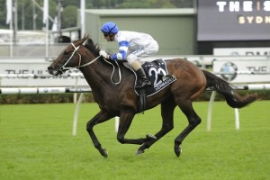 Kermadec remains clear favourite to win this afternoon's Group 1 George Main Stakes at Royal Randwick. Photo: Steve Hart