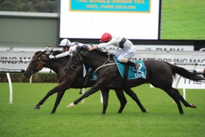 Miss Cover Girl (inside) held off a late charge from Peeping (outside) to win the 2015 PJ Bell Stakes. Photo: Steve Hart