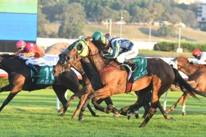 Luvaluva, above in lime blinkers, heads to Kembla Grange to run in The Gong. Photo by Steve Hart.