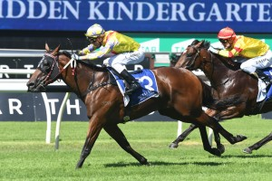Paquirri, above, scores an upset win in the Kindergarten Stakes at Randwick. Photo by Steve Hart.
