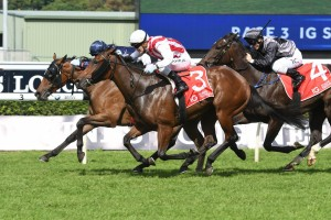 Shoals, above in red and white colours,, remained unbeaten with her win in the Atlantic Jewel Stakes at The Valley. Photo by Steve Hart.