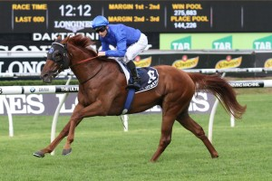 Handfast has been included in 2016 Hawkesbury Guineas nominations. Photo: Ultimate Racing Photos