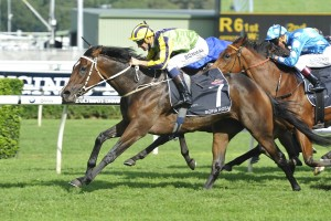 Sofia Rosa will be set for the Group 1 Caulfield Cup this time in. Photo: Steve Hart