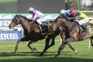 Etah James, above in the pale blue and cerise colours, outstayed her rivals to win the 2020 Sydney Cup at Randwick. Photo by Steve Hart.