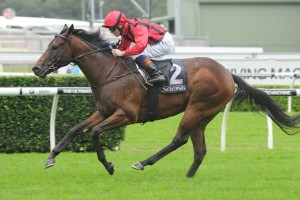 Hallowed Crown is one of 15 horses nominated for the Group 1 Rosehill Guineas.
