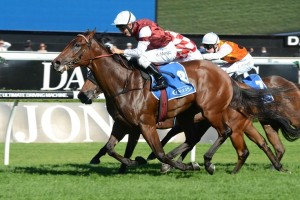 Guelph has been confirmed for a third-up appearance this campaign in the Group 2 Phar Lap Stakes
