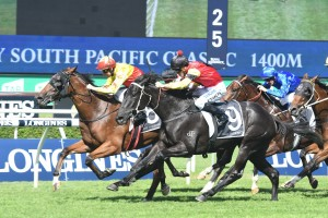 California Turbo, above in yellow and red colours, will line up in the Gunsynd Classic at Doomben. Photo by Steve Hart.