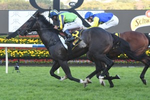 Tivaci,above, scores a last to first win in the All Aged Stakes at Randwick. Photo by Steve Hart.