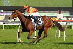 Rising Romance will line up for Saturday's 2016 Ballarat Cup. Photo: Steve Hart