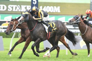 Trapeze Artist, above in black and gold colours, wins the All Aged Stakes at Randwick. Photo by Steve Hart.
