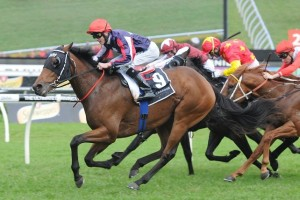 Go Indy Go will be aimed towards the Group 1 Thousand Guineas during the 2014 Spring Racing Carnival