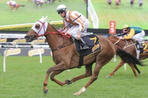 Hana's Goal is a possibility of appearing in the 2014 Stradbroke Handicap