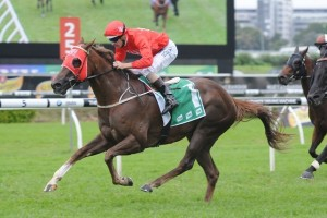 Hot Snitzel is back to full fitness ahead of the Southern Cross Stakes.