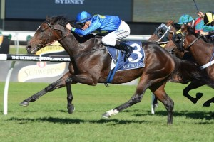 Tony Nicconi To McNeil Stakes After Vain Stakes Win