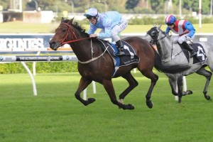 Trainer Les Bridge has revealed Avoid Lightning may make a trip to Queensland to contest the Group 1 Tattersall's Tiara
