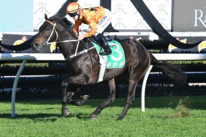 Sound Proposition, above, needs to win the Doncaster Prelude to gain a start in the Doncaster Mile at Randwick. Photo by Steve Hart.