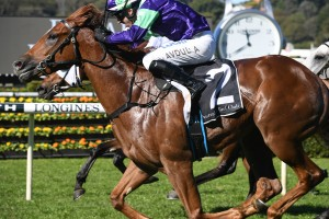 Excellent Proposal, above, made it two wins from starts with his victory at Randwick. Photo by Steve Hart.