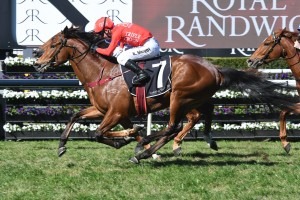 Military Zone, above, will be set for the Golden Eagle at Rosehill. Photo by Steve Hart.