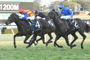 Pierata, above in red, yellow and blue colours, holds off Kementari in the Godolphin royal blue colours to win the Missile Stakes at Randwick. Photo by Steve Hart.