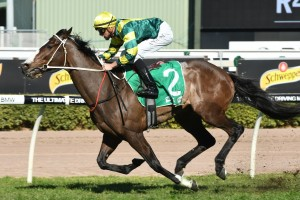 Care To Think, above, will run at double figure odds in the Lough Neagh Stakes at Doomben. Photo by Steve Hart.