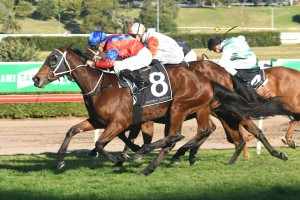 Invincible Gem has been confirmed in the 2017 Tramway Stakes field. Photo: Steve Hart