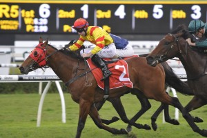 Thronum, above, is expected to run well in the Australia Stakes at The Valley. Photo by Steve Hart.