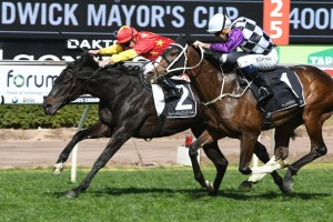 Auvray (pictured winning the Randwick Mayor's Cup) chased home Broadside in the Newcastle Cup. Photo by: Steve Hart