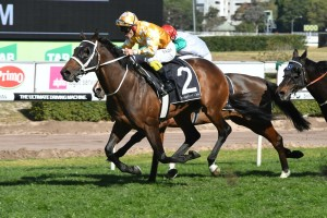 Comin' Through, above, has drawn an inside barrier in the Toorak Handicap at Caulfield. Photo by Steve Hart.