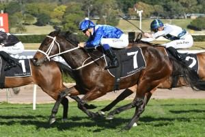 Winx showed a dazzling turn-of-foot to record a remarkable Warwick Stakes win. Photo by: Steve Hart