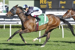 Tycoon Tara is our tip to win Saturday's Group 2 Sapphire Stakes at Royal Randwick. Photo: Steve Hart