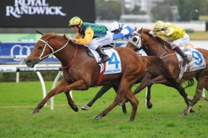 Tiger Tees scored a tough win over Royal Descent and Criterion in the 2014 Warwick Stakes at Royal Randwick this afternoon.