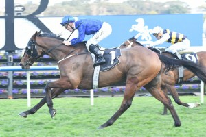Happy Clapper returned to the races with a nice win in the Tramway Stakes. Photo by: Steve Hart