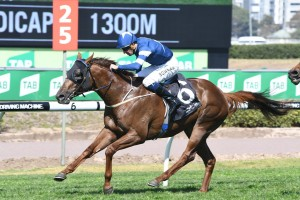 Super Ex could hardly have been more impressive in the opening race of the day at Royal Randwick. Photo by: Steve Hart