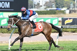 Up 'N' Rolling delivered as a short-priced favourite at Royal Randwick this afternoon. Photo by: Steve Hart
