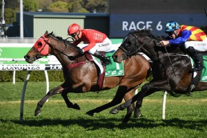 Redzel, above winning the 2019 Concorde Stakes, will be right at home a rain affected track in The Shorts at Randwick. Photo by Steve Hart.