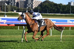 Samadoubt, above, scoreed an all the way win in the 20119 Chlemsford Stakes at Randwick. Photo by Steve Hart.