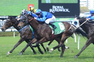 Malice (number 6) is favourite to win the ATC Cup this Saturday with good form behind him.