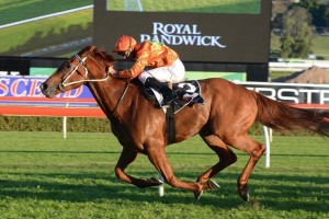 Terravista has taken out the 2014 The Shorts at Royal Randwick