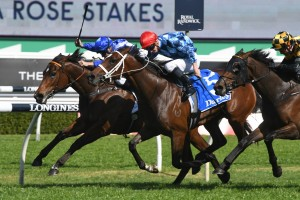 Funstar, above in red cap, is among the second acceptances for the 2019 Thousand Guineas at Caulfield. Photo by Steve Hart.