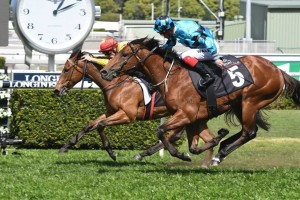 Dubious, above in the aqua and black colours, is one of the main chances in the 2019 Magic Millions 2yo Classic at the Gold Coast. Photo by Steve Hart.
