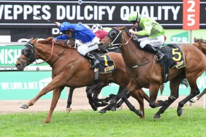 Ataraxia, above in royal blue colours, wins the Dulcify Quality at Randwick. Photo by Steve Hart.