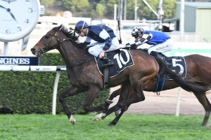 Foundry, above in dark blue and white colours, has been given a 1kg penalty for both the Caulfield Cup and the Melbourne Cup. Photo by Steve Hart.