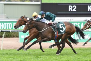 Satin Slipper, above, wins the Gimcrack Stakes at Randwick Photo by Steve Hart.