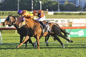 Takedown (purple cap) bobbed his head to win the Group 2 Premiere Stakes at Randwick this afternoon. Photo: Steve Hart