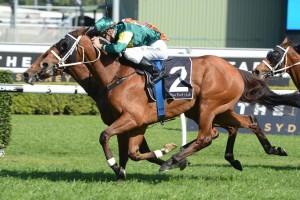 Moriarty wins Craven Plate from Rising Romance (2nd) and Vilanova (3rd). Photo: Steve Hart.